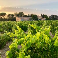 Domaine de Panisse's house and winery lie not far from Le Clos du Caillou, in the northeastern corner of Châteauneuf-du-Pape.Young Owners of Le Clos du Caillou Expand in Châteauneuf-du-Pape