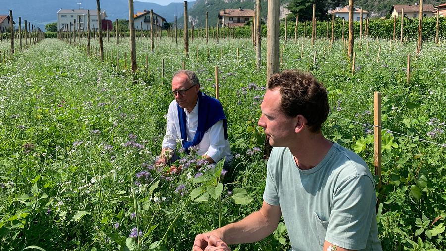 Can Assyrtiko thrive in Alto Adige? Should modern growers switch back to traditional vine-training techniques? Biodynamic winegrower Alois Lageder, now joined by his son, Alois Clemens Lageder, hasn't stopped experimenting in the vineyards or the cellar.