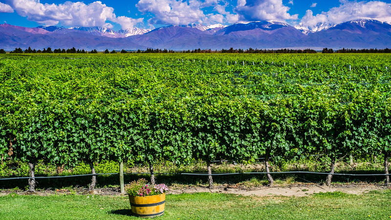 8 Argentine Malbec Values for $18 or Less