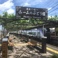 A bit of a departure at the Shiojiri Station Platform VineyardWine from World's Only Train-Station Vineyard Arrives