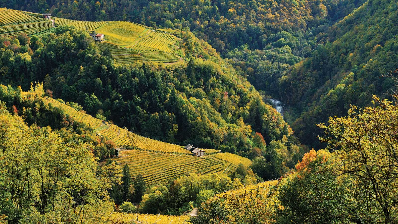 Alphabetical Guide to Italian Sparkling Wine
