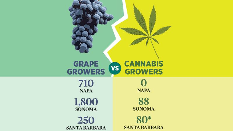Cannabis and Wine Struggle to Coexist