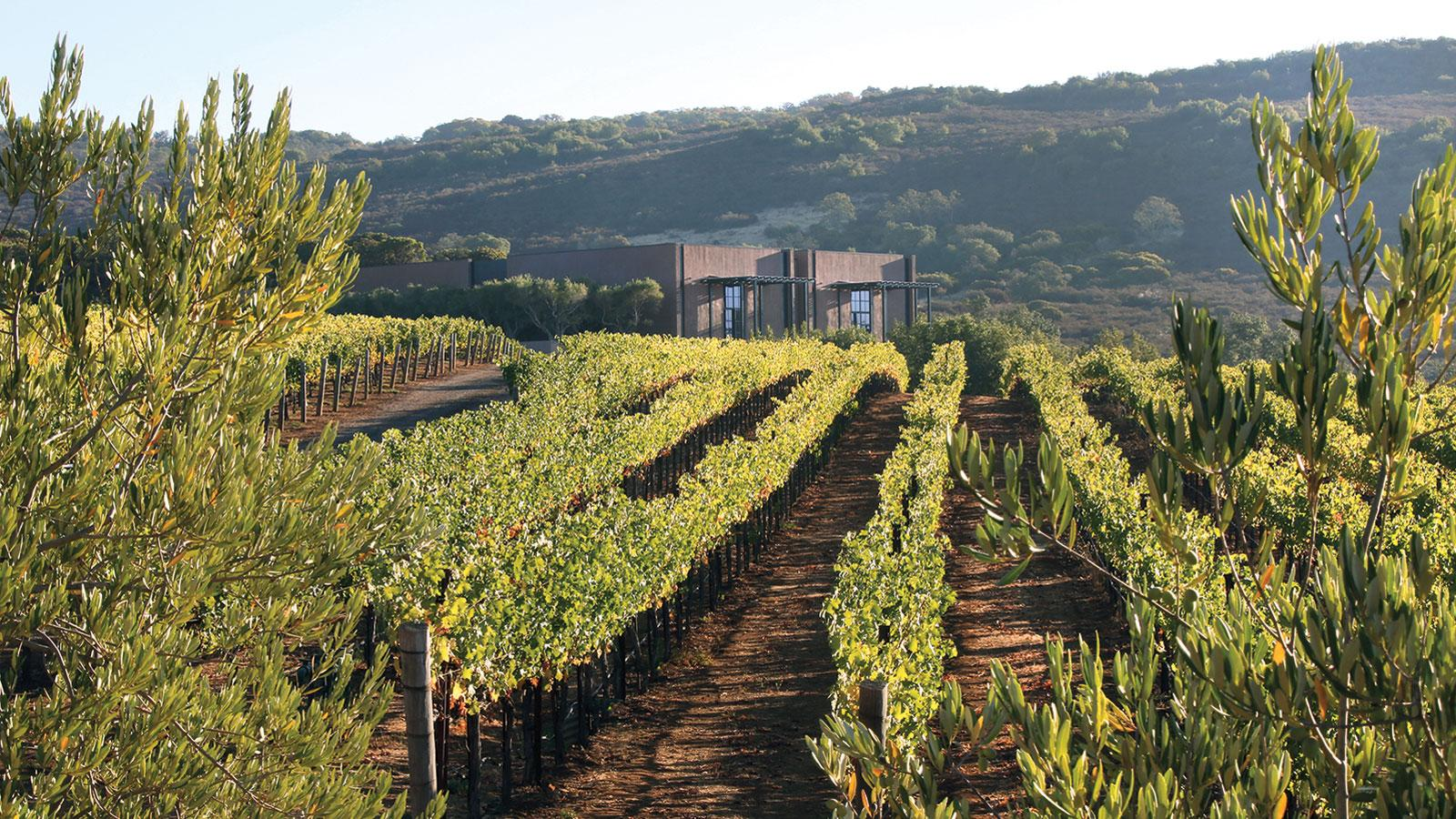 50 Top Napa Producers
